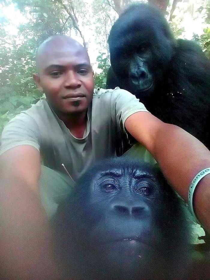 Селфи с гориллами Африка, Горилла, Селфи, Reddit, Африканцы