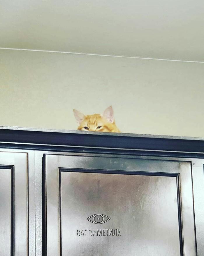 Кажется он что-то подозревает