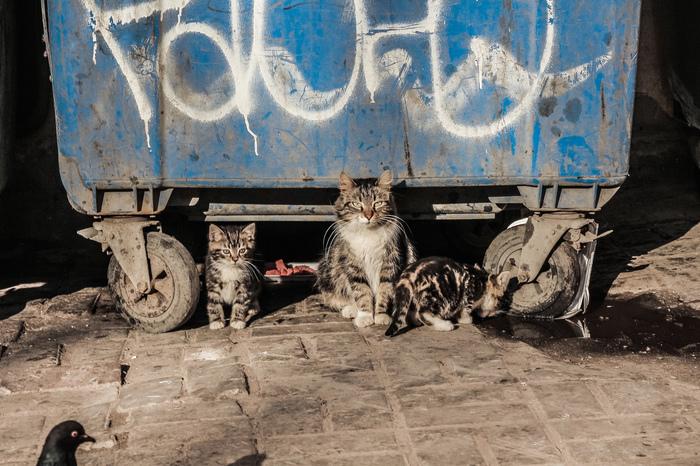 В питерском дворе... Санкт-Петербург, Двор, Бездомные животные, Помойка, Длиннопост, Кот