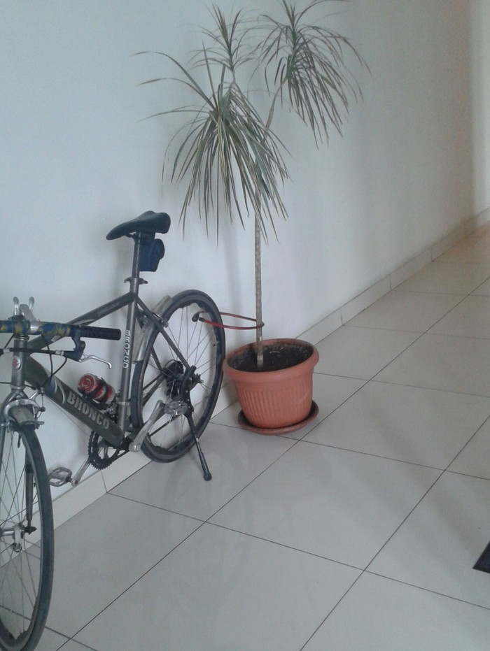 Б-Безопасность. Велосипед, Безопасность, Дерево, Работа, Длиннопост