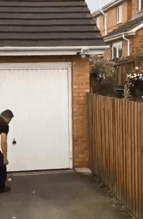 — Сосед, предлагаю дружить дворами!
