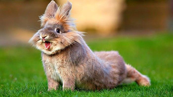 Весеннее обострение Фотоприкол, Домашние животные, Кролик, Юмор, Милота