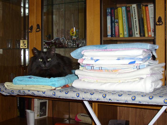 А гладите ли вы белье? Кот, Плохое качество фото, Длиннопост