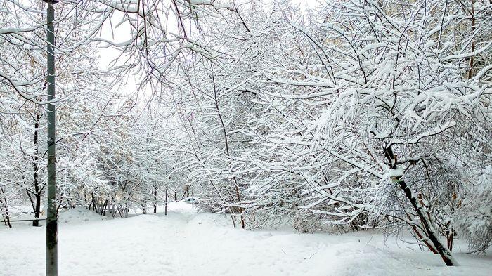 А вокруг белым-бело, и снега намело... Снег, Зима, Красота, Мобильная фотграфия, Павел Кашин, Видео