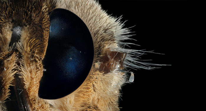 Угадаете объект из микромира? Микромир, Микроскоп, Микросъёмка, Фотография, Насекомые, Парацетамол, Комары, Видео, Длиннопост
