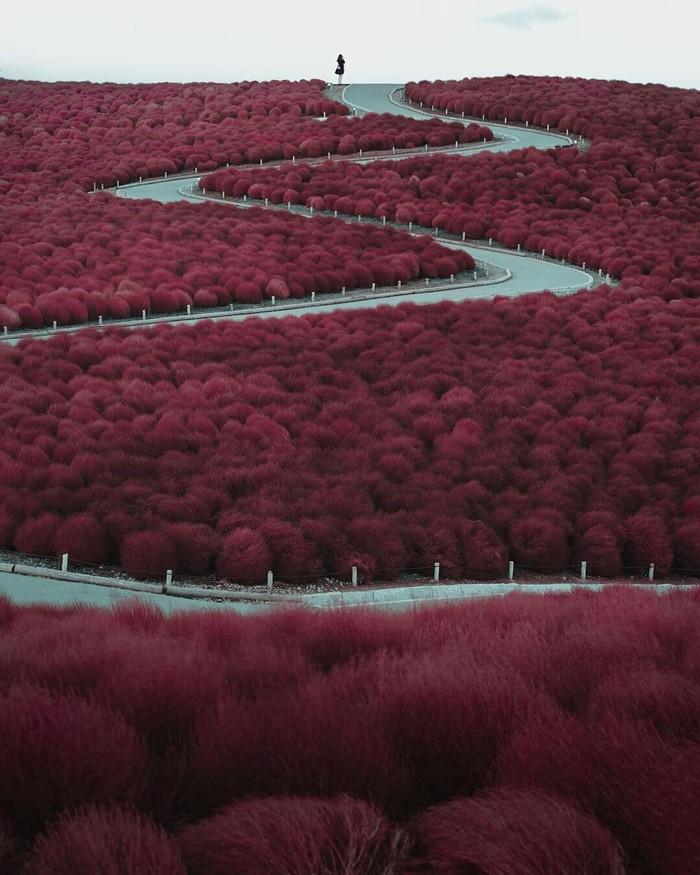 Дорога в цветочном парке Хитачи, Япония