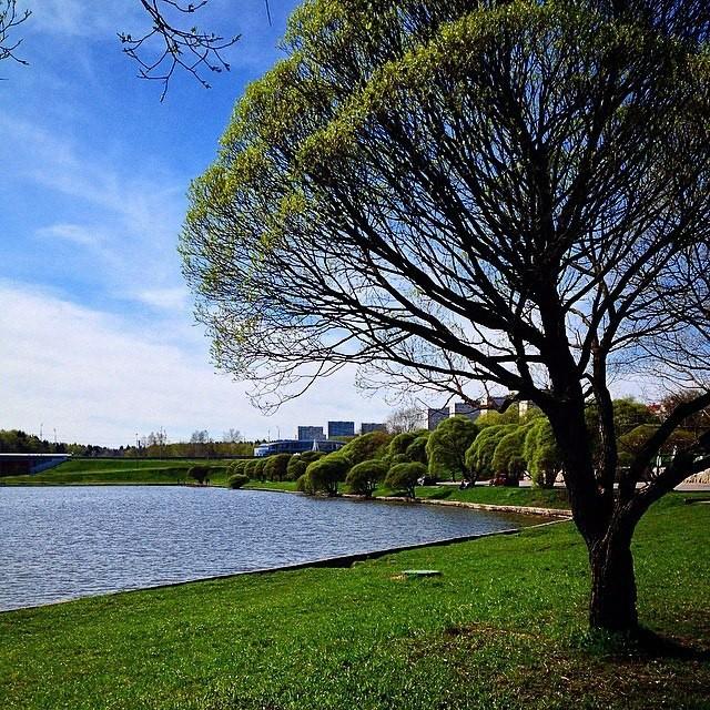 Весна! Красота природы, Спокойствие, Дерево, Пруд
