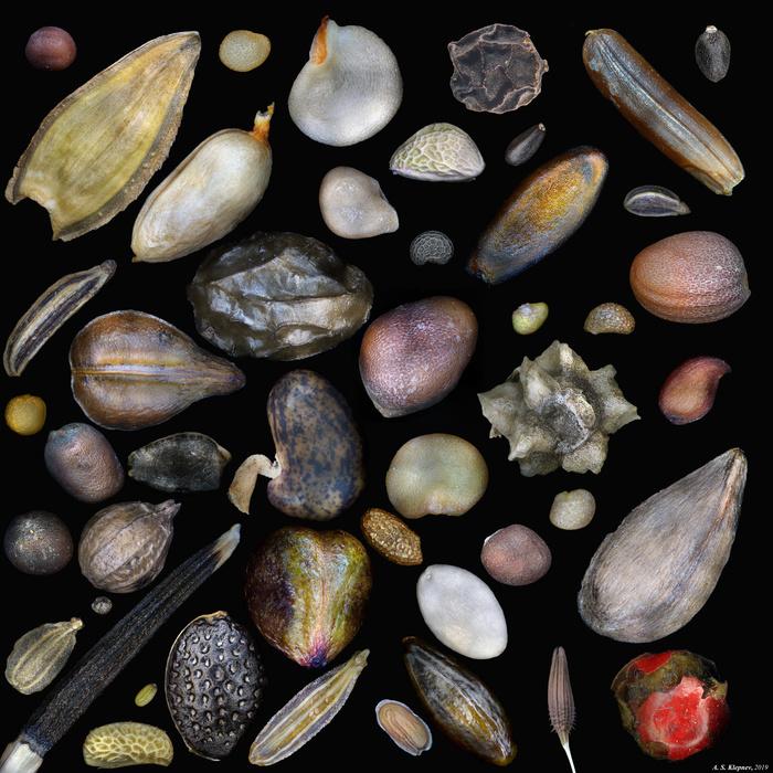 Семена Микроскоп, Семена