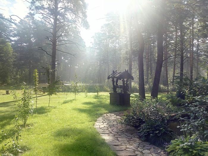 Утро в лесу. Работа, Газон, Лес, Природа