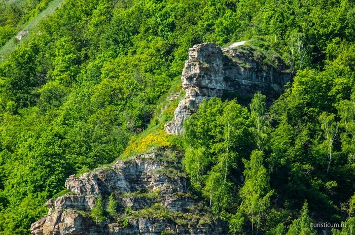 Верблюд в Самаре Горы, Скалы, Деревья на камнях, Природа, Бунт