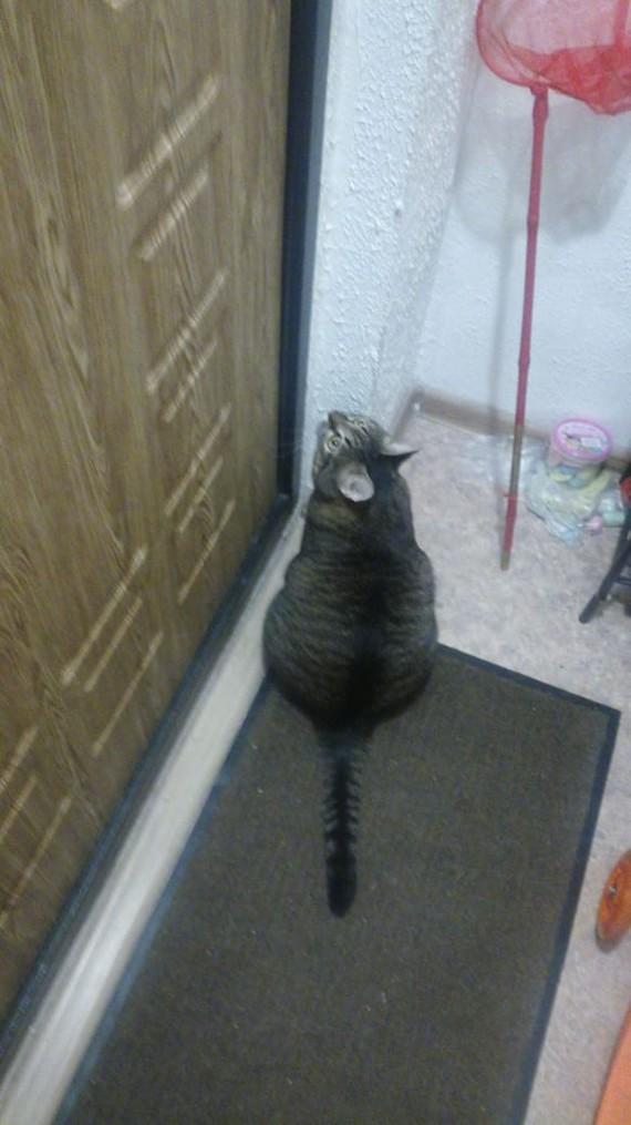 Котики так котики. Улетел в командировку, двое суток в ожидании, спит там же, на коврике. Длиннопост, Кот, Фотография