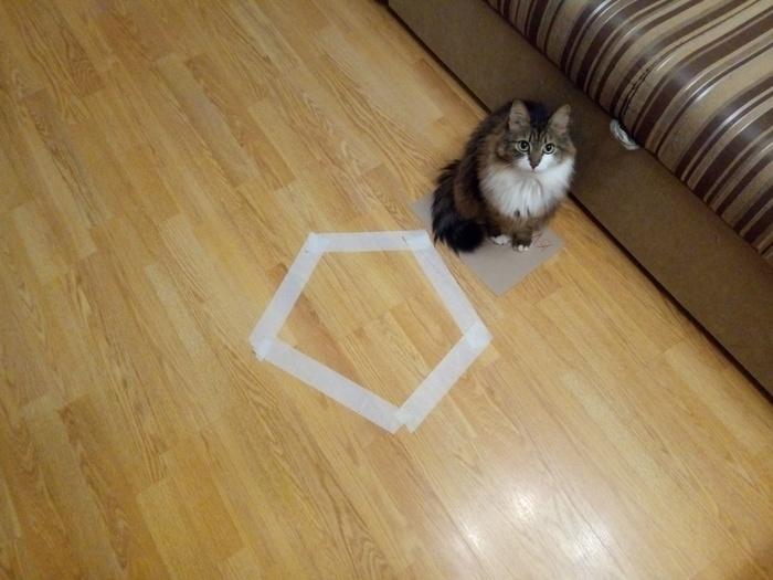 Когда дословно понял инструкцию Кот, Эксперимент, Не удался?