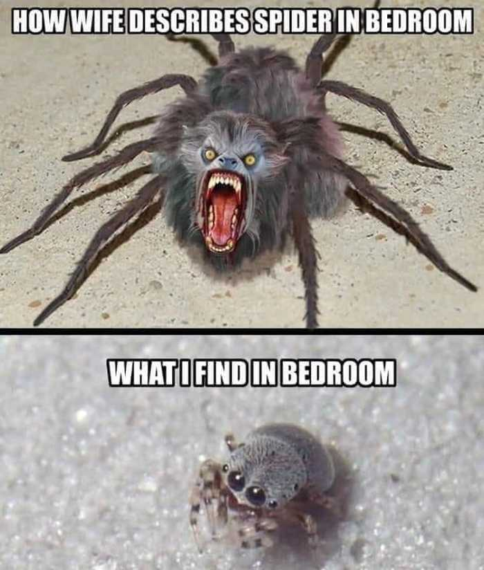 Как моя жена описывает паука в спальне Паук, Прикол, Разница