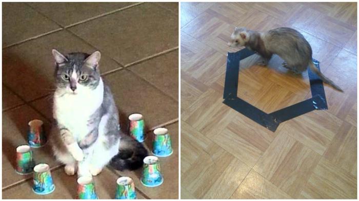 Хозяин опытным путём доказал, что коты всегда садятся в круг — даже нарисованный Животные, Эксперимент, Длиннопост, Кот
