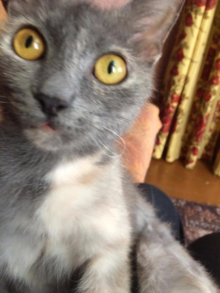 Кошка ищет дом, чтобы причинять уют и наносить милоту Отдам, В добрые руки, Кот, Самара, Длиннопост, Без рейтинга
