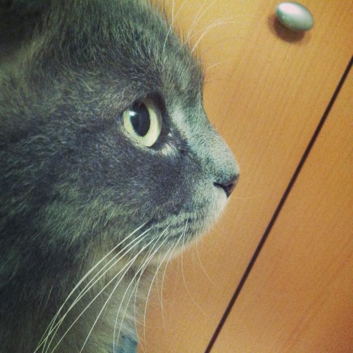 Где и у кого заказать адресник для кошки? Кот, Просьба, Адресник