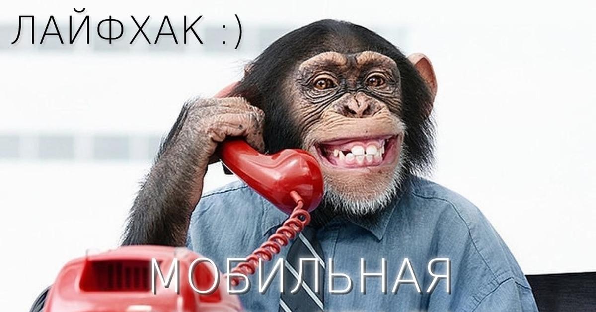 прикольная картинка обезьяна в офисе после