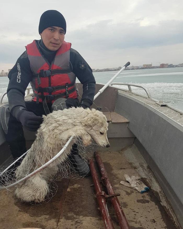 Собака 10 дней дрейфовала на льдине в Казахстане г.Кокшетау Спасение животных, Собака, Волонтеры, Добрые дела, Кокшетау, Казахстан, Видео, Гифка, Длиннопост