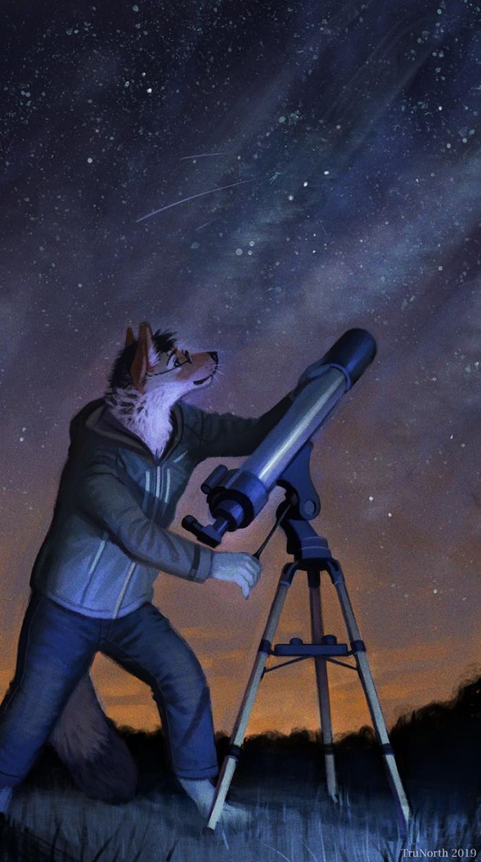 Stargazing Фурри, Furry Art, Furry Canine, Trunorth