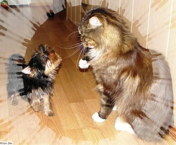 Кот и Собака Кот, Собака, Длиннопост