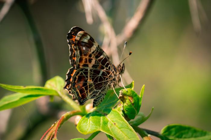Бабочка Фотография, Макросъемка, Бабочка