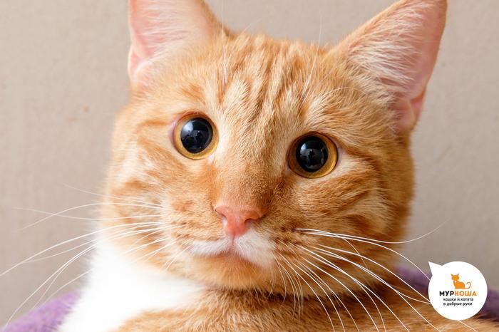 Котик Отличник: я буду вашим солнышком! Приют муркоша, Муркоша, Кот, Помощь животным, Видео, Длиннопост, В добрые руки