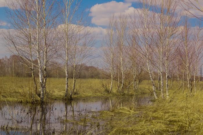 Весна. Деревня. Красота. Фотография, Камера, Природа, Деревня, Весна, Животные, Алтай, Длиннопост