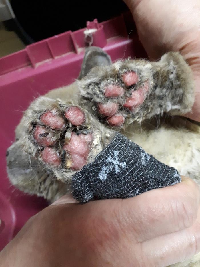Кота-погорельца принесли усыплять. Но в клинике решили его вылечить. Кот, Жесть, Помощь животным, Пожар, Волонтеры, Санкт-Петербург, Фотография, Длиннопост