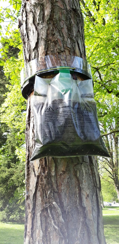 Процессионарии. Интересный способ борьбы с насекомыми Насекомые, Европа, Инсектициды, Природа, Гусеница, Длиннопост