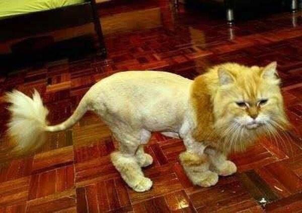 У кота мозгов не хватает.... Кот, Мой хозяин идиот, Котомафия