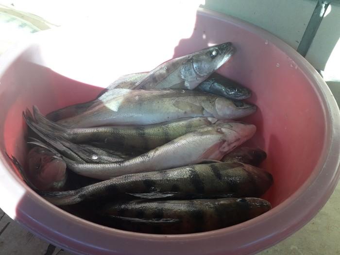 Астраханская рыбалка Рыба, Рыбалка, Вобла, Жерех, Астрахань