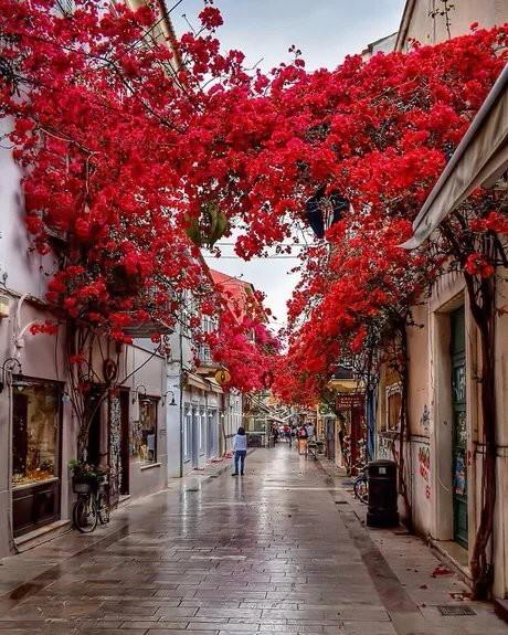 Аллея в Греции