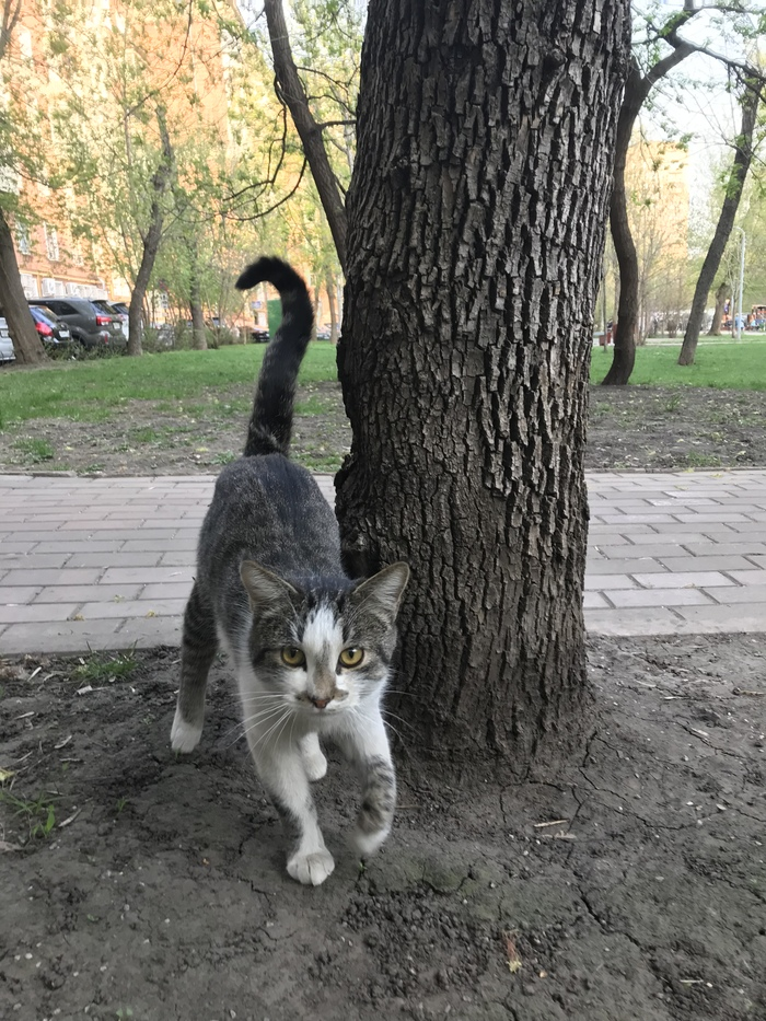 Котик в добрые руки. Кот, Без рейтинга, В добрые руки, Длиннопост