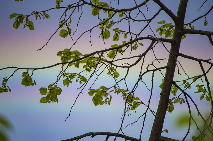 Первые листочки на фоне радуги