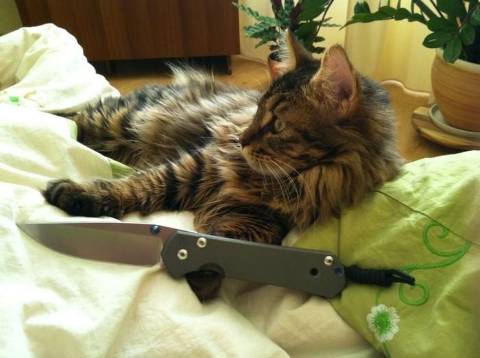 Кот и заточка ножей... Кот, Еда, Длиннопост