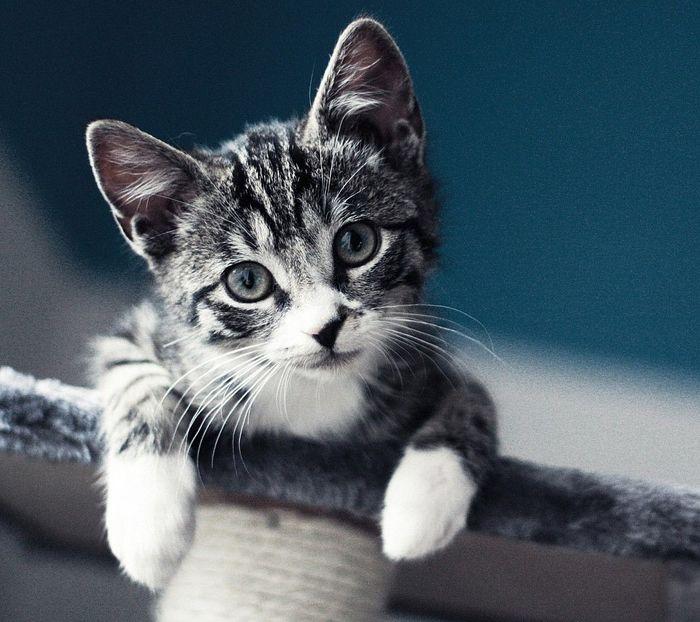 """Этот котик любит погорячее, так что в """"горячее"""" его подкиньте)"""