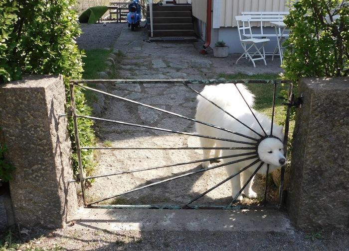 Собакен-солнышко