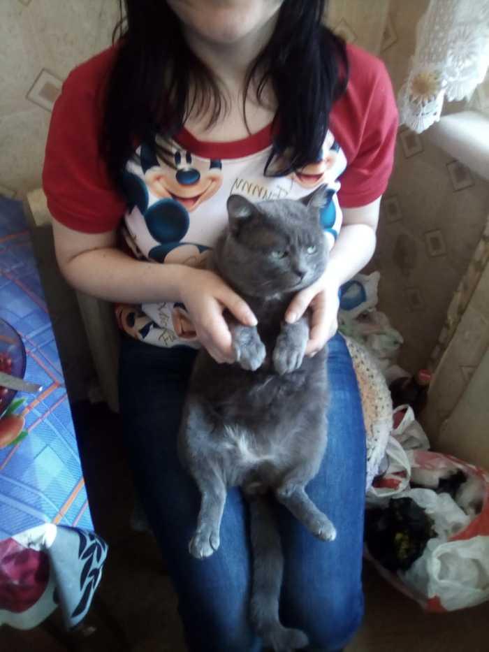 Омск! Хэлп! [Кота нашли] Без рейтинга, Кот, Омск, Потерялся кот, Помогите найти, Поиск