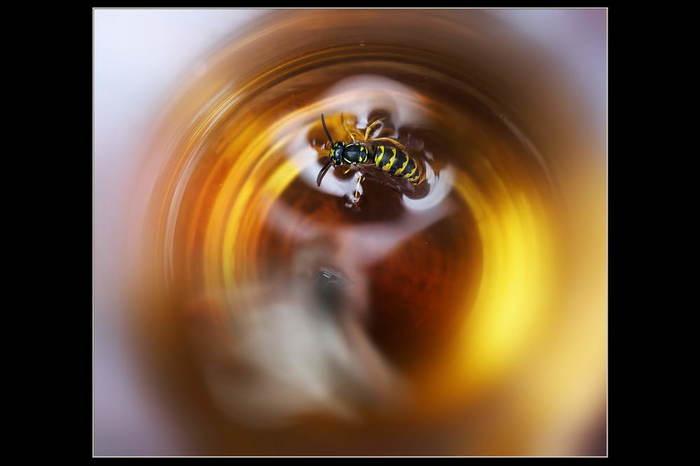 Автопортрет с осой в стакане пива