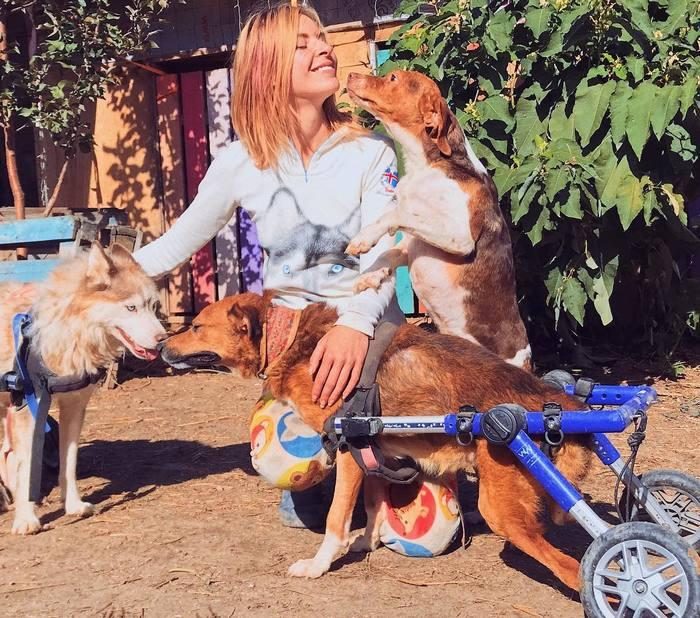 Успешный российский фотограф бросила работу и теперь живёт за городом с сотнями больных животных Собаки и люди, Приют, Фотограф, Животные, Добро, Длиннопост