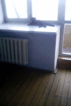 Кот Марсель Кот, Общежитие, Берсерк, Котомафия, Мат, Гифка