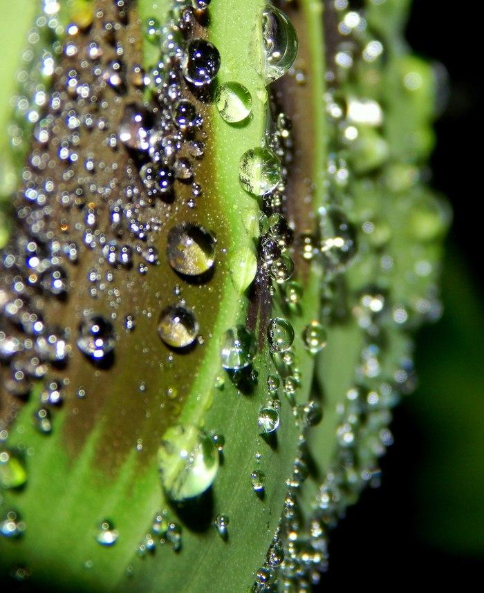 Случайные кадры Макро, Начинающий фотограф, Растения