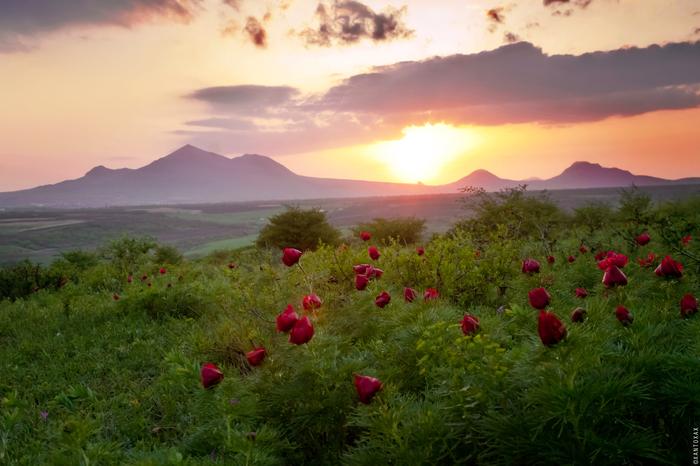 Дикие пионы и закат на горе Лысой Горы, Кавказ, Закат, Пионы