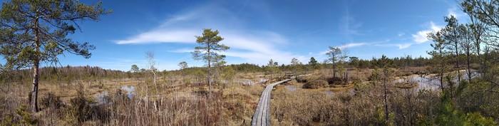 Ведьмино болото (Кемери, Латвия)