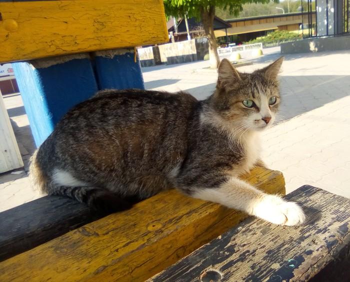 Настороженный котэ Кот, Лавочка