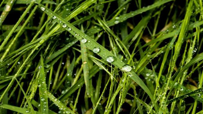 Накапало Фотография, Дождь, Капли, Клопы-Солдатики, Солнце