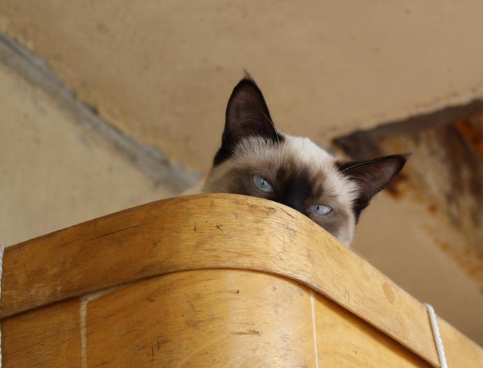 Пушистый трус и деревенская стерва Кот, Котомафия, Фотография