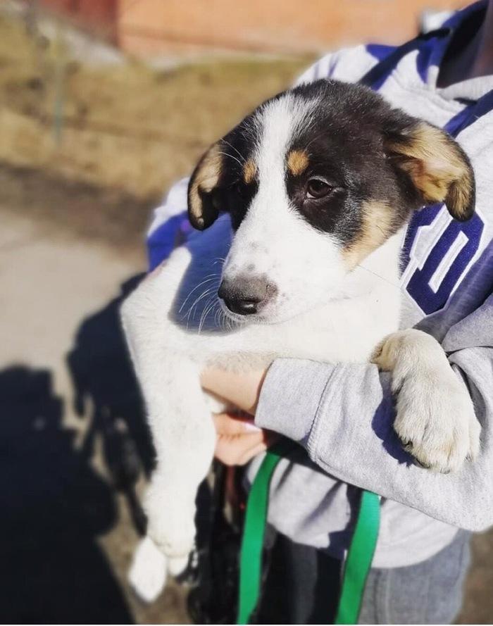 Собака и её будущий хозяин Приют для животных, Приют Ржевка, Санкт-Петербург, Длиннопост, Волонтеры, Видео, Собака, Без рейтинга