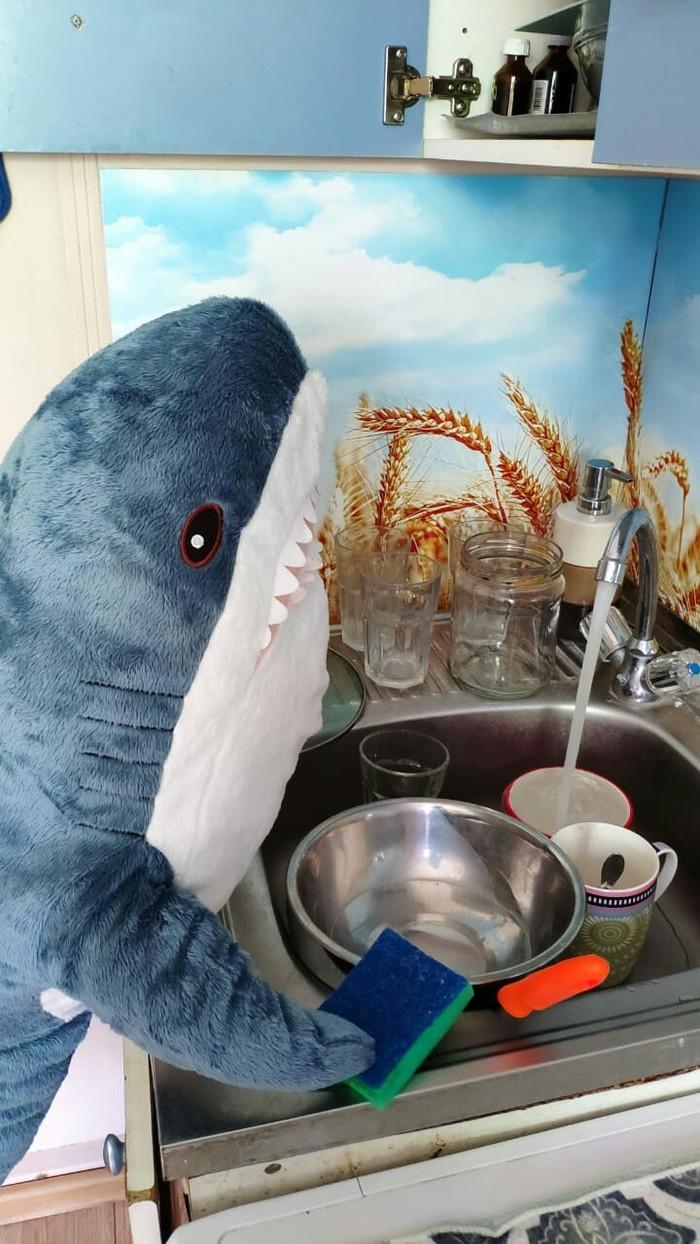 Акула из ИКЕА ИКЕА, Акула, Кот, Мягкая игрушка, Блохэй, Длиннопост