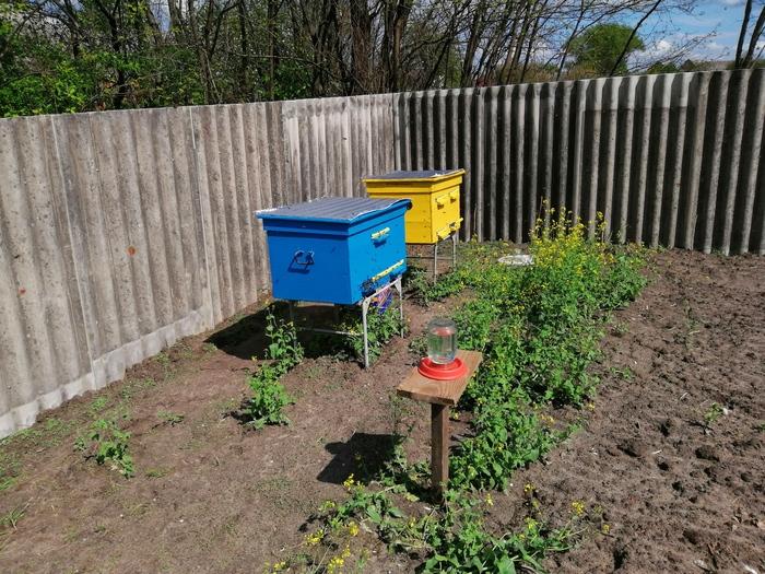 Пасека: Начало Пчеловодство, Мед, Пчелы
